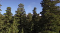 Fly RISE LOW through tree topsRedwood Forest, Aerial, 4K, 44s, 41of50, Forest Trees, Northern California Tallest trees in the world, Sun flare, Hyperion Tree, world record, Stock Video Sale - Drone Discoveries 4K Nature/Wildlife/Weather Drone aerial video