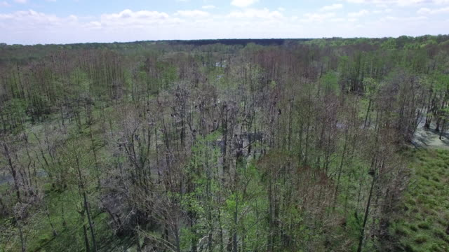Fly to over top of birds nesting in nest - Drone Aerial 4K Everglades, Swamp bayou with wildlife alligator nesting Ibis, Anhinga, Cormorant, Snowy Egret, Spoonbill, Blue Heron, eagle, hawk, cypress tree 4K Nature/Wildlife/Weather