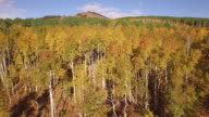 Fly up Aspen tree grove, Aerial, 4K, 33s, 33of34, Aspen Trees, Foliage, Mountains, Beautiful Colors, Changing leaves, Colorado, Aerial, Stock Video Sale - Drone Discoveries 4K Nature/Wildlife/Weather Drone aerial video