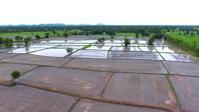 Fliegen über Reisterrassen in einen schönen Tag, aerial video