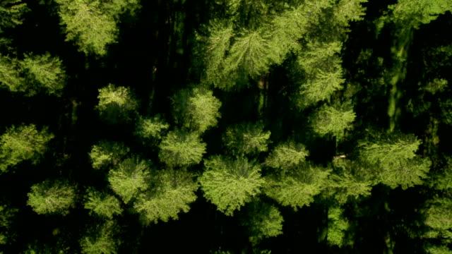HD: Volare sopra la Zona arborea