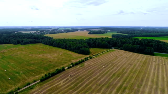 Flying and turning above the not fully ripe wheat field.