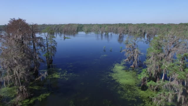 Flying around swamp in the tree tops - Drone Aerial 4K Everglades, Swamp bayou with wildlife alligator nesting Ibis, Anhinga, Cormorant, Snowy Egret, Spoonbill, Blue Heron, eagle, hawk, cypress tree 4K Transportation