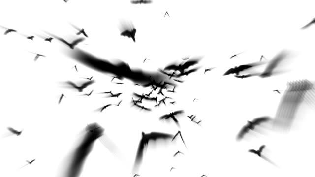 Fliegen Bats