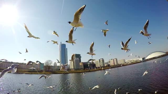 Fliegende Vögel Zeitlupe