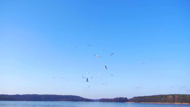 Flying birds.
