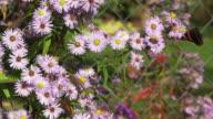 ZEITLUPE: - Schmetterling
