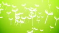 Flying Dandelions