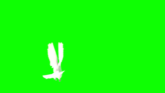Flying Dove On A Chroma Key (Super Slow Motion)