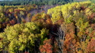 Flying from mixed forest to evergreens in autumn