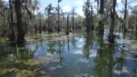 Flying in swamp to small rise - Drone Aerial 4K Everglades, Swamp bayou with wildlife alligator nesting Ibis, Anhinga, Cormorant, Snowy Egret, Spoonbill, Blue Heron, eagle, hawk, cypress tree 4K Nature/Wildlife/Weather