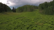 flying low to aspen trees - Drone Aerial Video 4K Colorado Rocky Mountains, Colorado river, Mountain dam at lake granby, beautiful water reflection, spring, pristine water, foliage, wildlife aspen trees discovery landscape 4K Nature/Wildlife/Weather