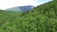 AERIAL fliegt über einem dichten grünen Wäldern