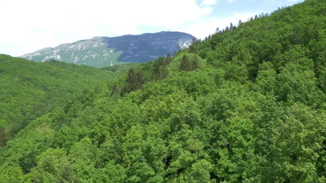 Luchtfoto vliegen over een dichte groene woud