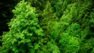 Fliegt über Wald der Alpen