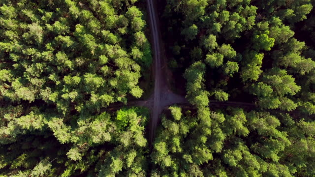 Flying over the crossing roads in summer pine forest 4K