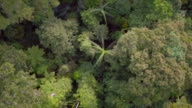 Flying over the tropical rainforest canopy looking straight down