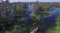 Flying over tour boat in swamp down tree tops - Drone Aerial 4K Everglades, Swamp bayou with wildlife alligator nesting Ibis, Anhinga, Cormorant, Snowy Egret, Spoonbill, Blue Heron, eagle, hawk, cypress tree 4K Transportation