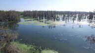 Flying through tree tops in louisiana swamp bayou - Drone Aerial 4K Everglades, Swamp bayou with wildlife alligator nesting Ibis, Anhinga, Cormorant, Snowy Egret, Spoonbill, Blue Heron, eagle, hawk, cypress tree 4K Nature/Wildlife/Weather