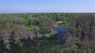 Flying up to boat in swamp people on a tour - Drone Aerial 4K Everglades, Swamp bayou with wildlife alligator nesting Ibis, Anhinga, Cormorant, Snowy Egret, Spoonbill, Blue Heron, eagle, hawk, cypress tree 4K Transportation
