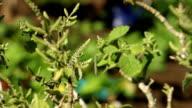 Focus pull to African male farmer watering plants, KwaZulu Natal, South Africa