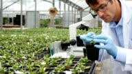 Focused Caucasian male botanist inspects plant in greenhouse