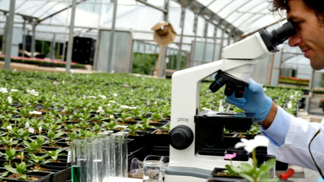 Focused male scientist analyzes a sample while working in a plant nursery