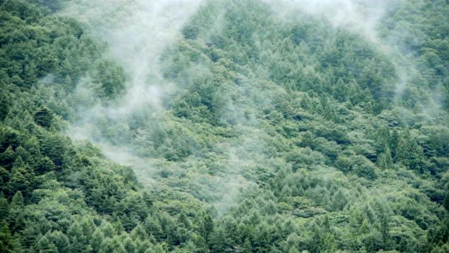 Nebel nach Regen auf Berg Wald