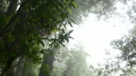 Fog in Tropical RainForest, 4k(UHD), Low Angle view