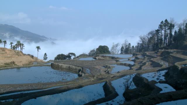 T/L WS Fog rolling above terraced rice paddies, Yuanyang, Yunnan, China