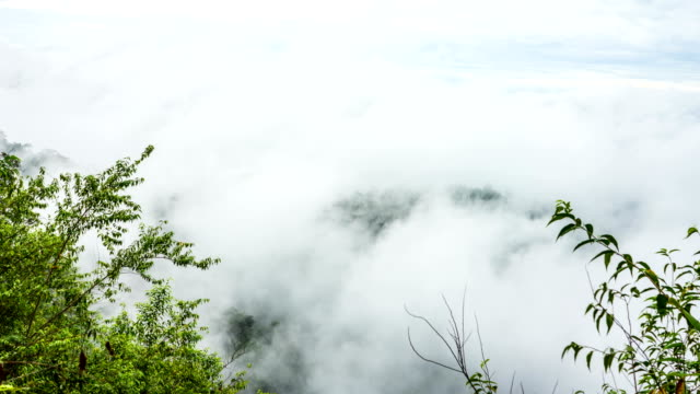 Fog Rolls Across Flowing over Tropical Mountains, Time Lapse Video