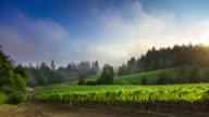 Foggy Sunset at California Winery - Time Lapse
