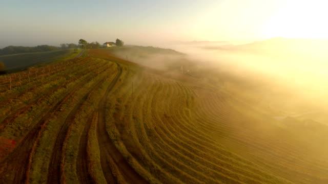 AERIAL Foggy Viniferous Countryside