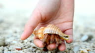 follow: big Hermit crab comes back to nature