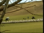 Vaccination row EN HARRY Flock of sheep herded thru field by farm vehicles LS Farm with Ministry of agriculture officials in overalls seen thru trees...