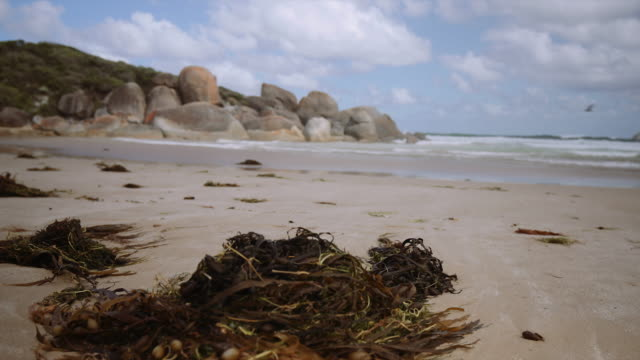 4K footage of an empty beach with seaweed in the foreground, Wilson Promontory, Victoria, Australia