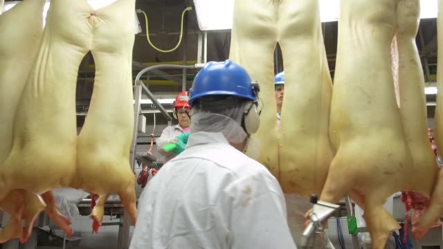 Footage of pork processing as raw pig carcasses are hung and cleaned at the Smithfield plant in Milan Missouri on April 12 2017 Shots pan left as...