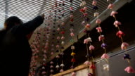 Footage taken on Feburary 9Japan shows female members of a local merchants' association in Onjuku Chiba Prefecture decorating a hall with sets of...