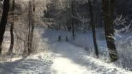 WS ZI Footbridge in forest in winter / Winterberg, North Rhine Westphalia, Germany