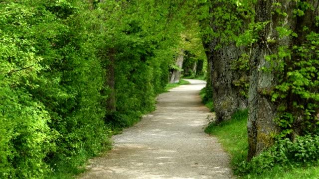 Footpath in the spring, Inning Stegen, Fuenfseenland, Upper Bavaria, Bavaria, Germany