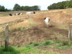 For European dairy farmers the crisis over the fall of milk prices goes on Peyrissas HauteGaronne France