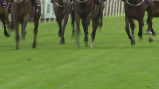 For years it was assumed that race horses had reached the limit of their abilities but scientists have found they're now faster than ever before But...