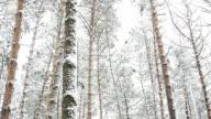 Forest after snowfall. Winter landscape.