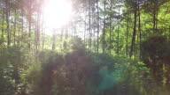 Foresta e alberi attraverso la finestra 4 k auto