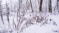 SLO MO Forest Covered With Snow