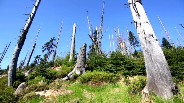Forest, von Baumrinde Käfer Schwenk nach oben