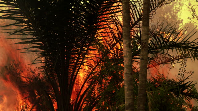 Forest fire burning in Sumatra, Indonesia.