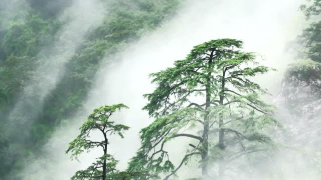 forest Nebel