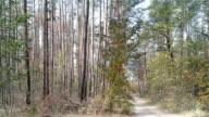 Forest in autumn season.