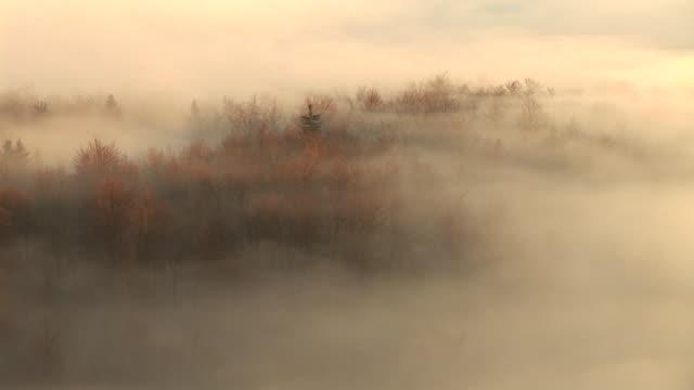 HD: Wald im Nebel